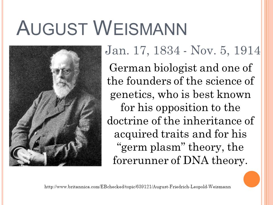 A UGUST W EISMANN German biologist and one of the founders of the science of genetics, who is best known for his opposition to the doctrine of the inheritance of acquired traits and for his germ plasm theory, the forerunner of DNA theory.