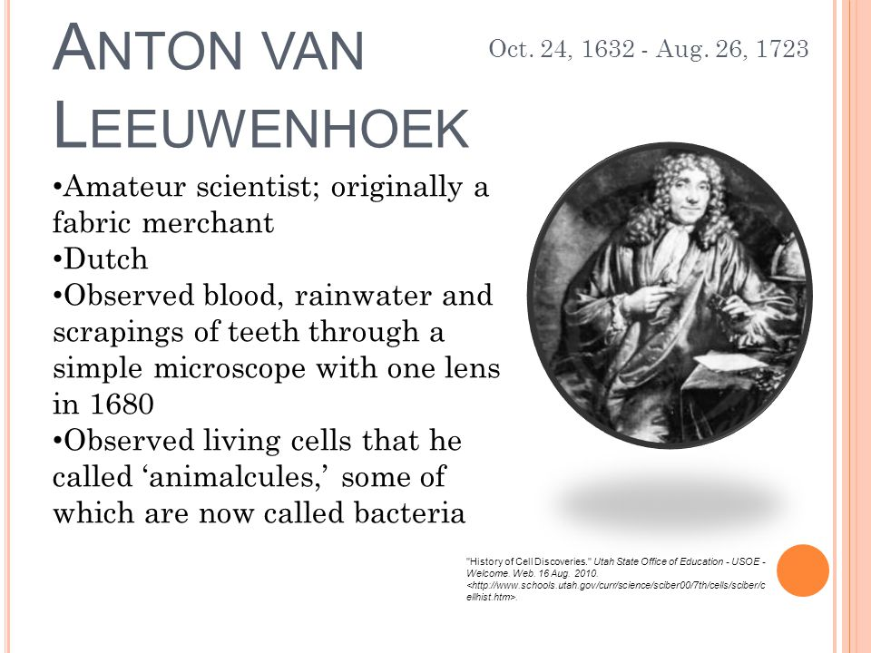 A NTON VAN L EEUWENHOEK Amateur scientist; originally a fabric merchant Dutch Observed blood, rainwater and scrapings of teeth through a simple microscope with one lens in 1680 Observed living cells that he called 'animalcules,' some of which are now called bacteria History of Cell Discoveries. Utah State Office of Education - USOE - Welcome.
