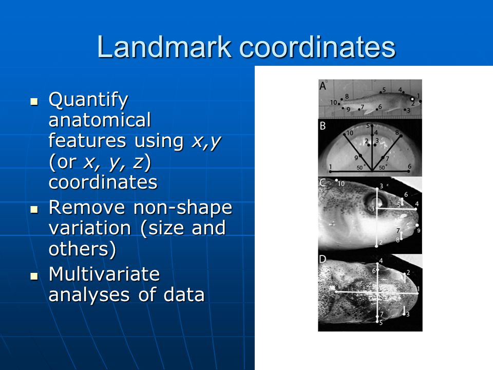 Landmark coordinates Quantify anatomical features using x,y (or x, y, z) coordinates Quantify anatomical features using x,y (or x, y, z) coordinates Remove non-shape variation (size and others) Remove non-shape variation (size and others) Multivariate analyses of data Multivariate analyses of data