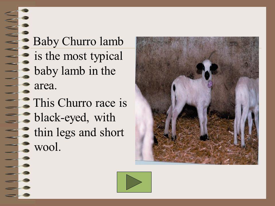 BABY CHURRO LAMB (LECHAZO)