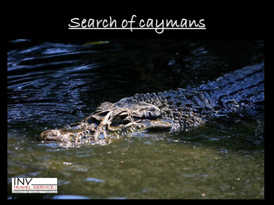 Search of caymans