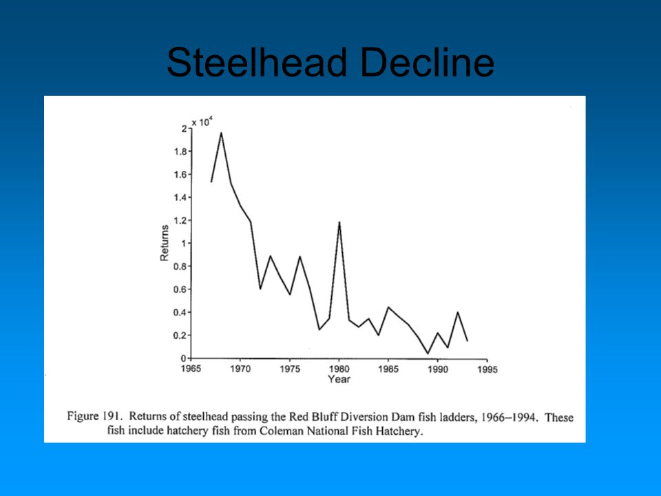 Steelhead Decline