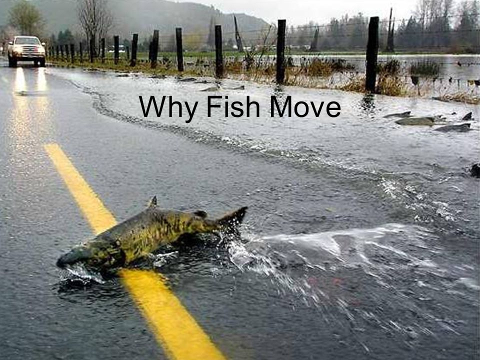 Why Fish Move