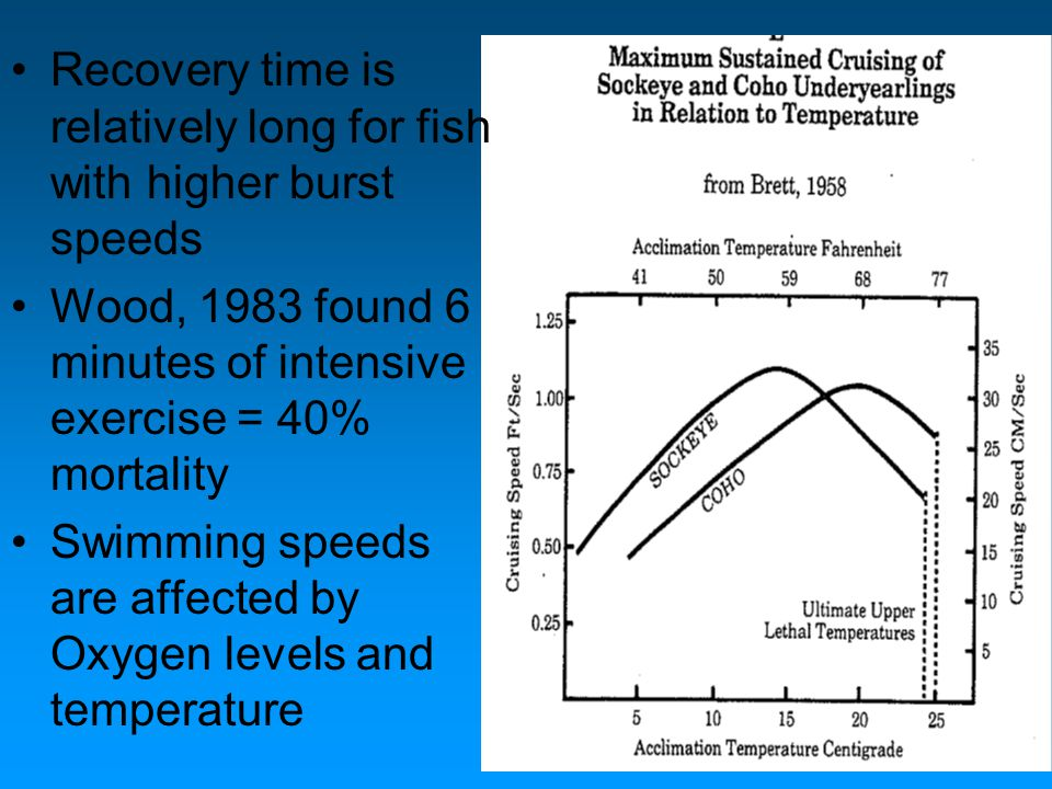 Recovery time is relatively long for fish with higher burst speeds Wood, 1983 found 6 minutes of intensive exercise = 40% mortality Swimming speeds ar