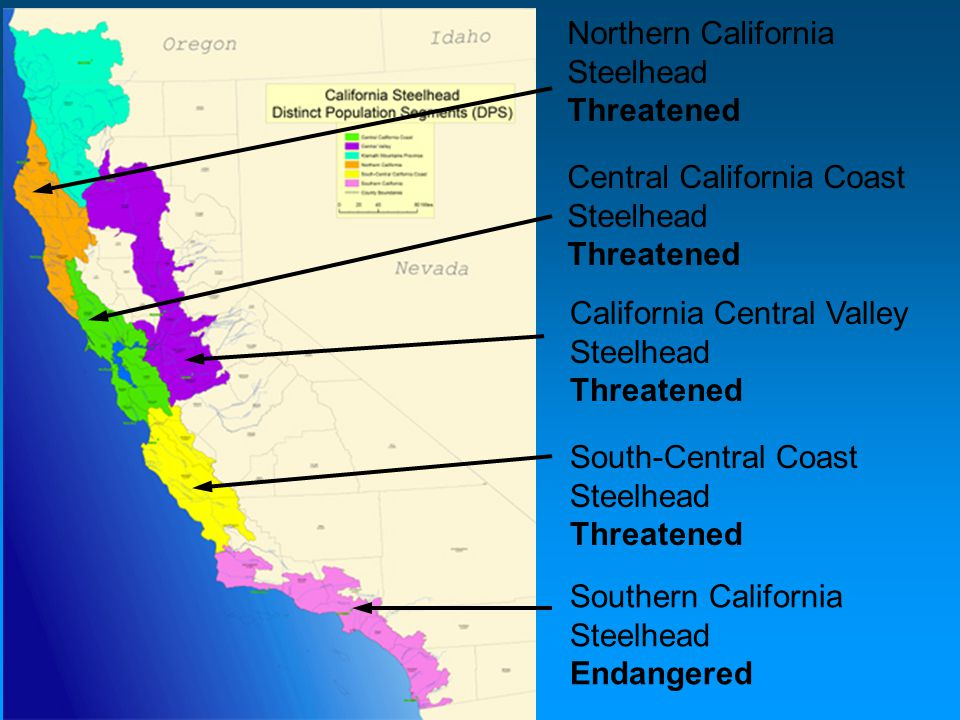 Northern California Steelhead Threatened Central California Coast Steelhead Threatened California Central Valley Steelhead Threatened South-Central Co