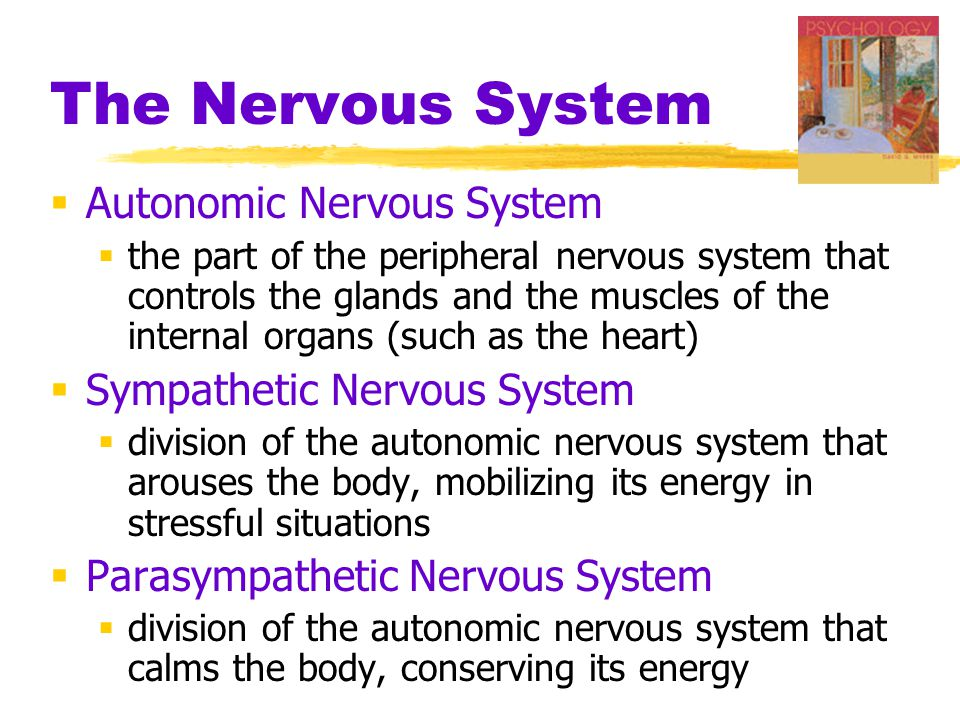 The Nervous System  Autonomic Nervous System  the part of the peripheral nervous system that controls the glands and the muscles of the internal org