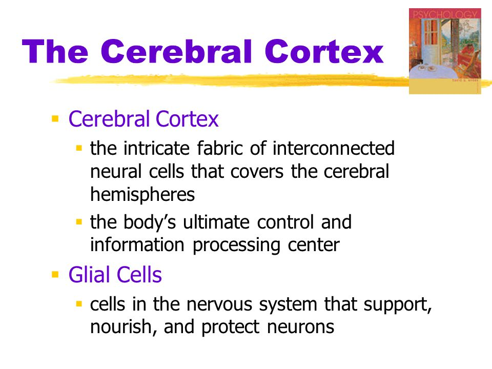 The Cerebral Cortex  Cerebral Cortex  the intricate fabric of interconnected neural cells that covers the cerebral hemispheres  the body's ultimate