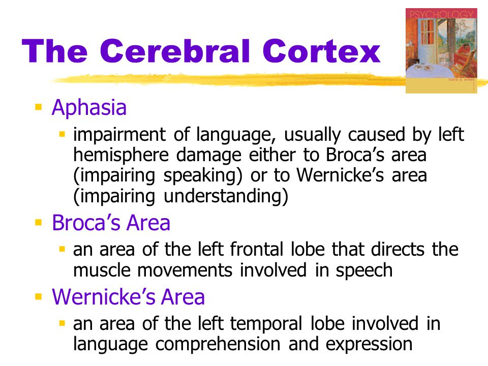 The Cerebral Cortex  Aphasia  impairment of language, usually caused by left hemisphere damage either to Broca's area (impairing speaking) or to Wer