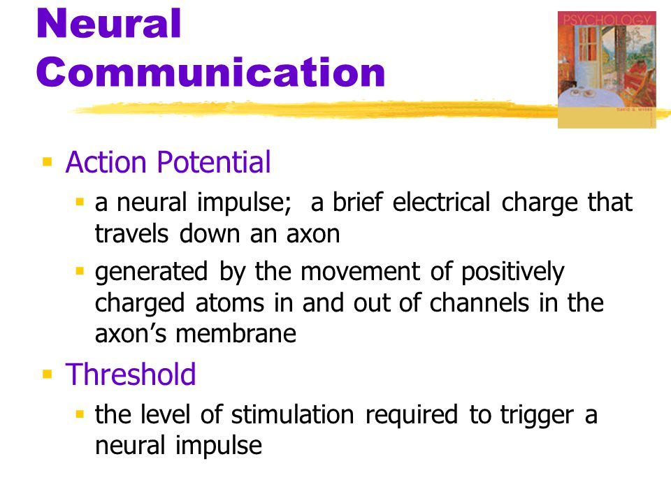  Action Potential  a neural impulse; a brief electrical charge that travels down an axon  generated by the movement of positively charged atoms in
