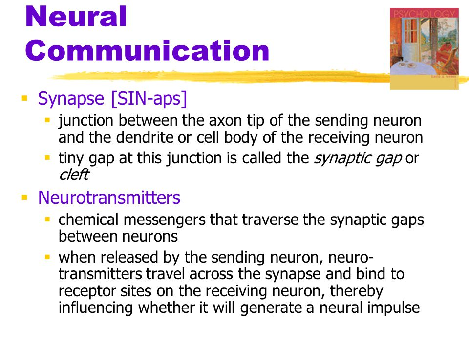 Our Divided Brain  The information highway from the eye to the brain
