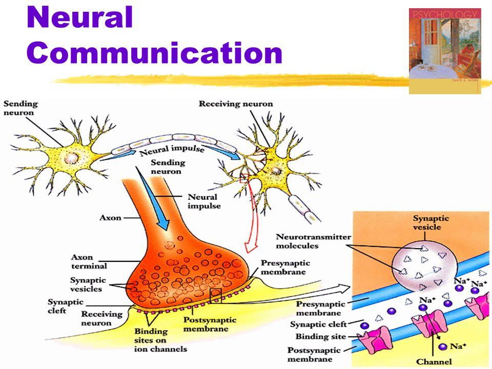 Serotonin Pathways Dopamine Pathways