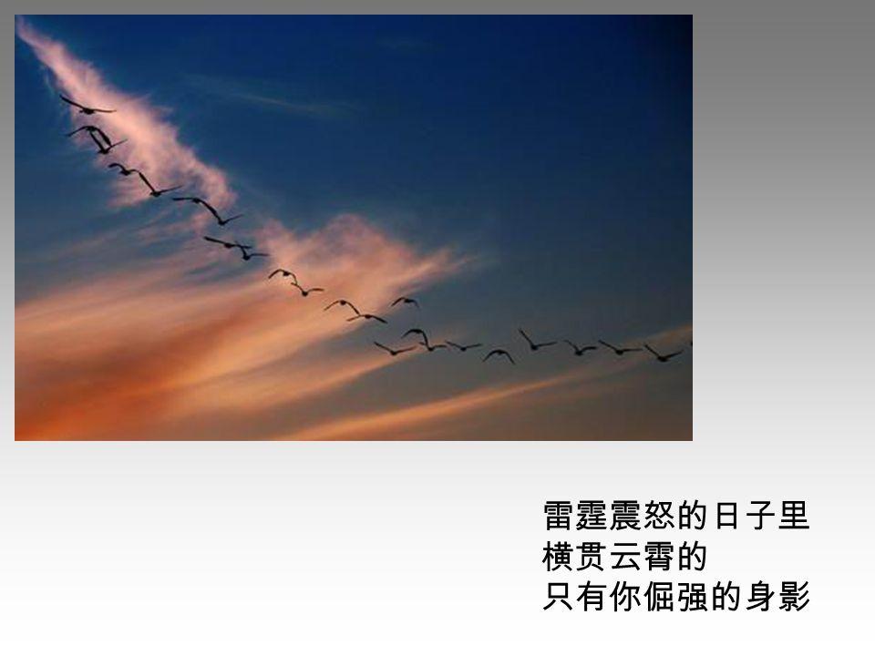 翔集于云天时 哨中透着一种安详