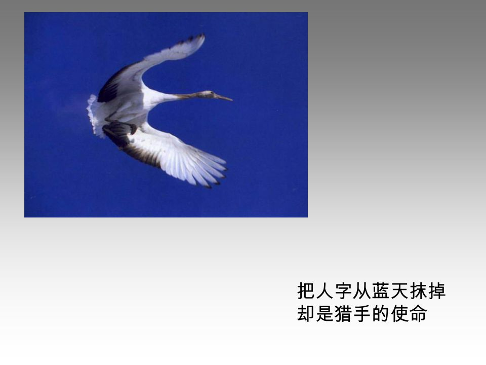 把人字从蓝天抹掉 却是猎手的使命