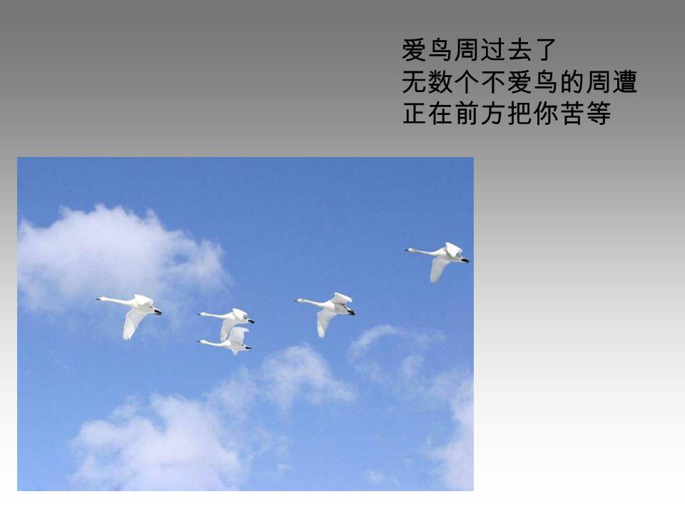 爱鸟周过去了 无数个不爱鸟的周遭 正在前方把你苦等