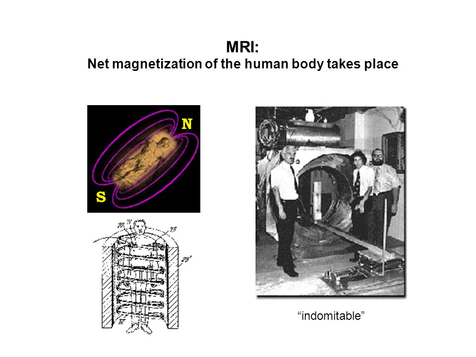 MRI: Net magnetization of the human body takes place indomitable