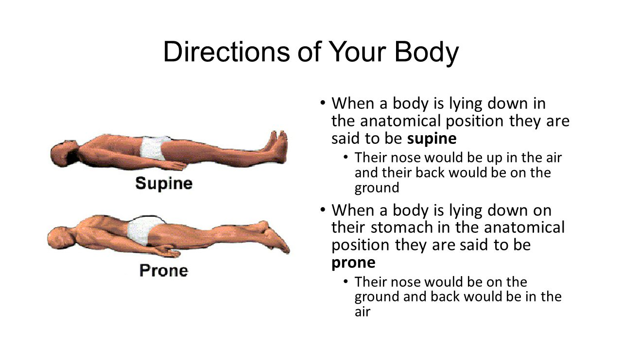 Directions of Your Body When a body is lying down in the anatomical position they are said to be supine Their nose would be up in the air and their back would be on the ground When a body is lying down on their stomach in the anatomical position they are said to be prone Their nose would be on the ground and back would be in the air