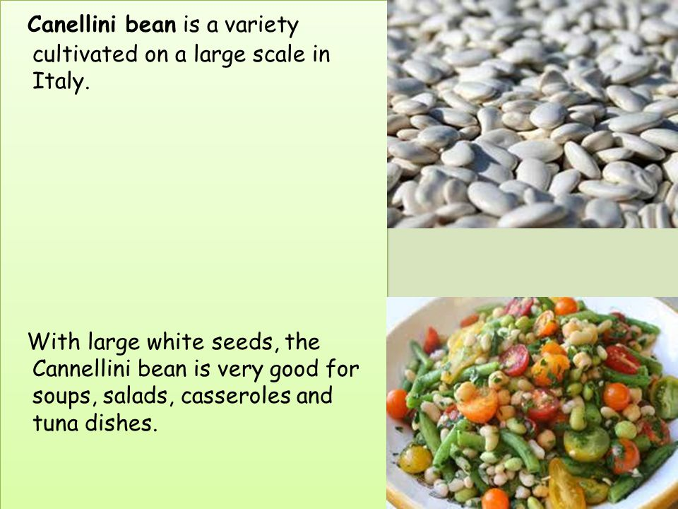 Canellini bean is a variety cultivated on a large scale in Italy.