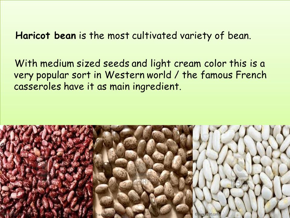 Haricot bean is the most cultivated variety of bean. With medium sized seeds and light cream color this is a very popular sort in Western world / the
