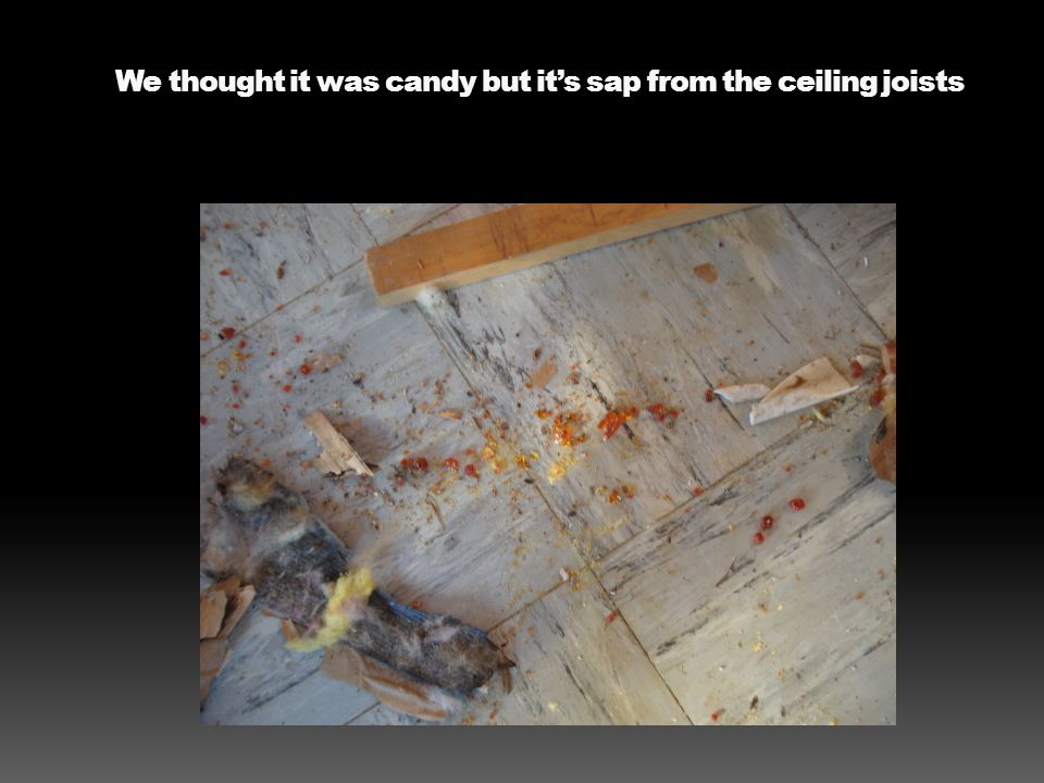 We thought it was candy but it's sap from the ceiling joists