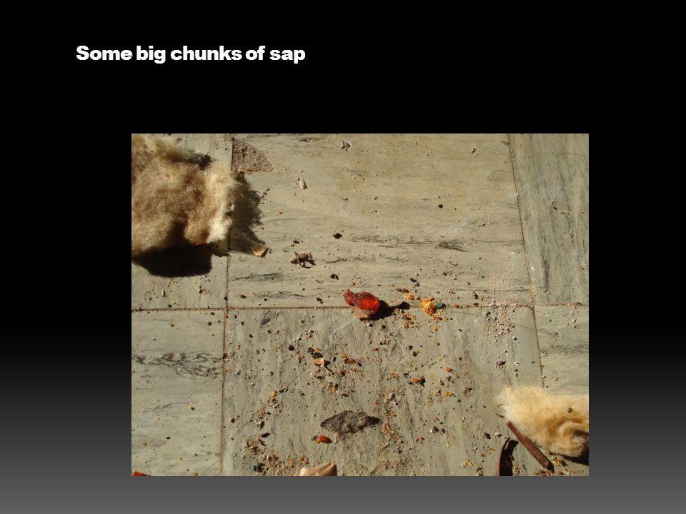 Some big chunks of sap