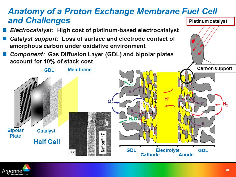 28 Anatomy of a Proton Exchange Membrane Fuel Cell and Challenges Electrocatalyst: High cost of platinum-based electrocatalyst Catalyst support: Loss