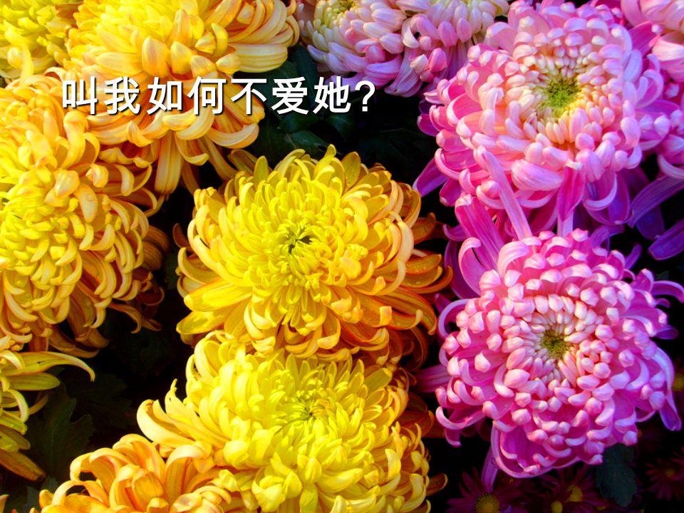 江南忆,最忆是杭州!