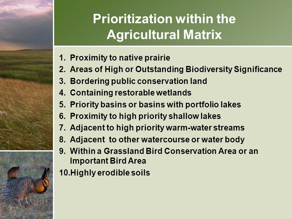Prioritization within the Agricultural Matrix 1.Proximity to native prairie 2.Areas of High or Outstanding Biodiversity Significance 3.Bordering publi