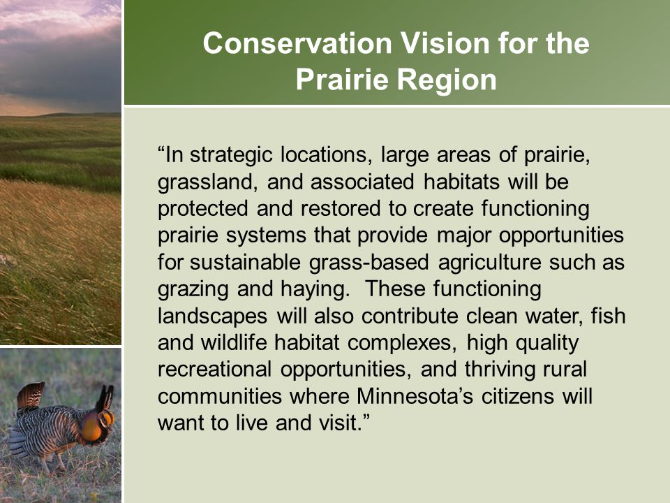 "Conservation Vision for the Prairie Region ""In strategic locations, large areas of prairie, grassland, and associated habitats will be protected and r"
