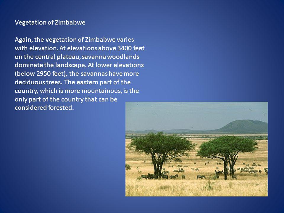Vegetation of Zimbabwe Again, the vegetation of Zimbabwe varies with elevation. At elevations above 3400 feet on the central plateau, savanna woodland