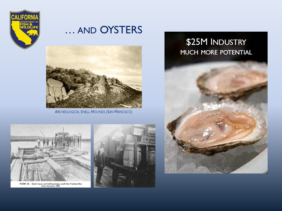 A RCHEOLOGICAL S HELL M OUNDS (S AN F RANCISCO ) … AND OYSTERS $25M I NDUSTRY MUCH MORE POTENTIAL