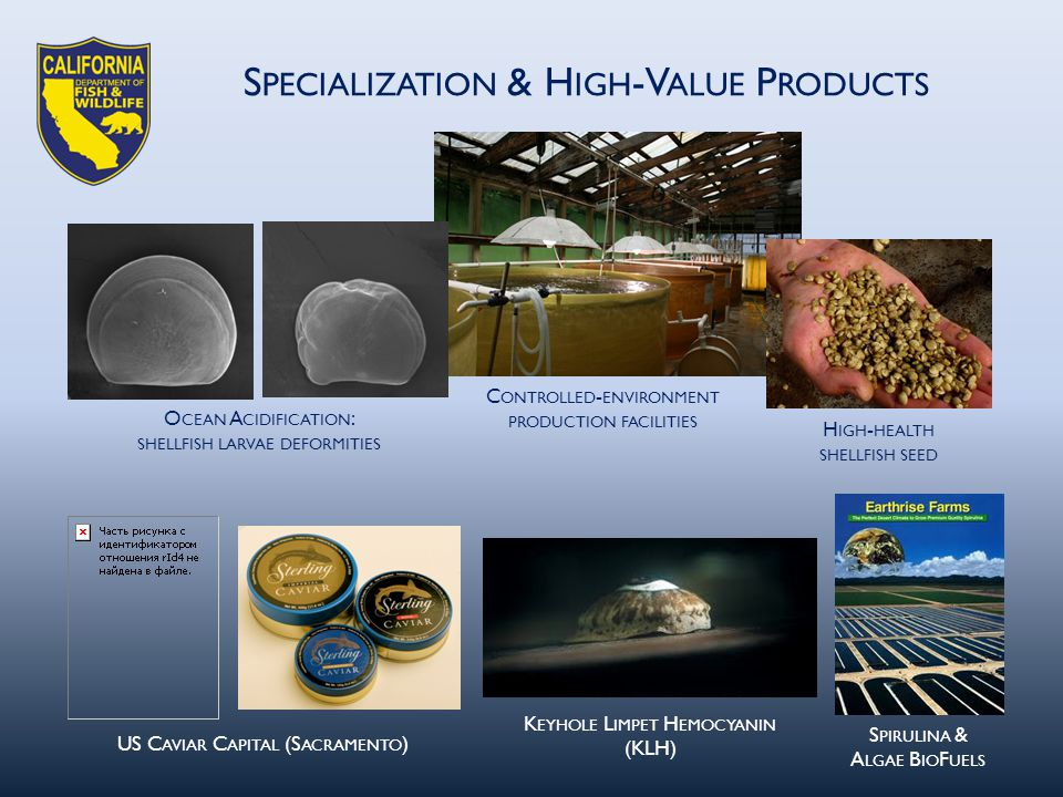 US C AVIAR C APITAL (S ACRAMENTO ) K EYHOLE L IMPET H EMOCYANIN (KLH) S PIRULINA & A LGAE B IO F UELS H IGH - HEALTH SHELLFISH SEED C ONTROLLED - ENVIRONMENT PRODUCTION FACILITIES S PECIALIZATION & H IGH -V ALUE P RODUCTS O CEAN A CIDIFICATION : SHELLFISH LARVAE DEFORMITIES