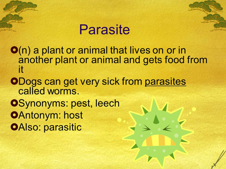 Parasite  (n) a plant or animal that lives on or in another plant or animal and gets food from it  Dogs can get very sick from parasites called worms.