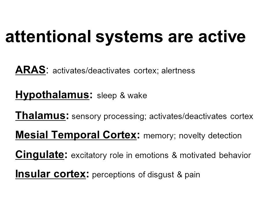 attentional systems are active ARAS: activates/deactivates cortex; alertness Hypothalamus: sleep & wake Thalamus: sensory processing; activates/deacti