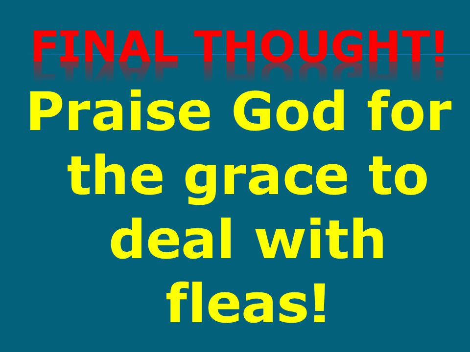 Praise God for the grace to deal with fleas!