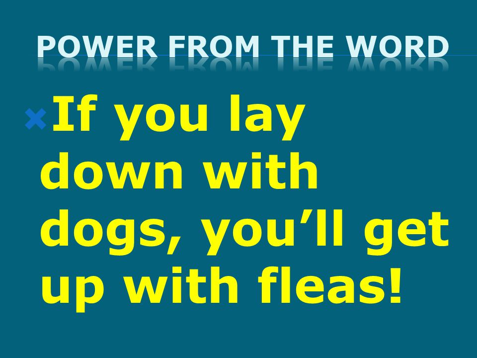  If you lay down with dogs, you'll get up with fleas!