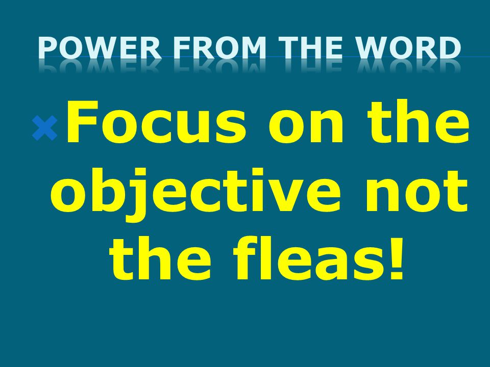  Focus on the objective not the fleas!