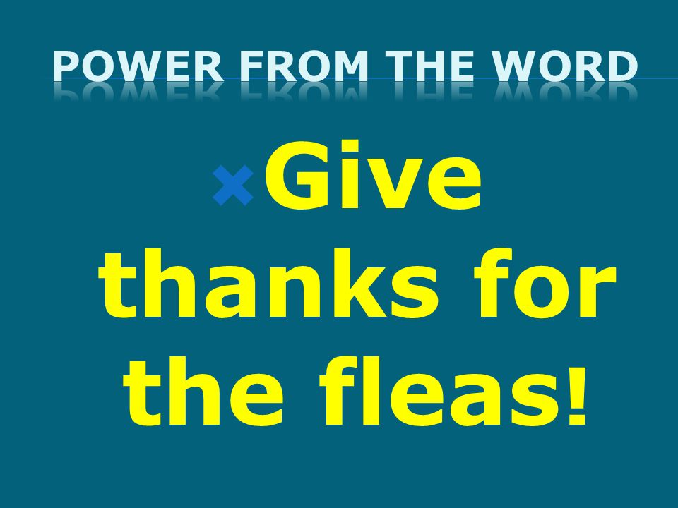  Give thanks for the fleas !