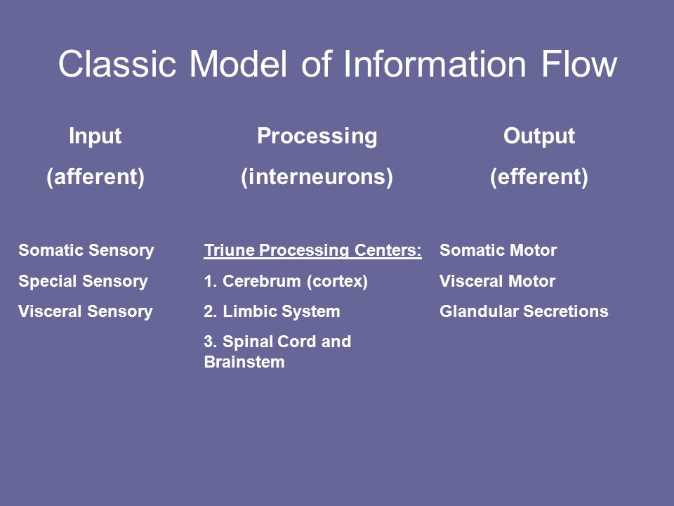 Classic Model of Information Flow Input (afferent) Somatic Sensory Special Sensory Visceral Sensory Processing (interneurons) Triune Processing Centers: 1.
