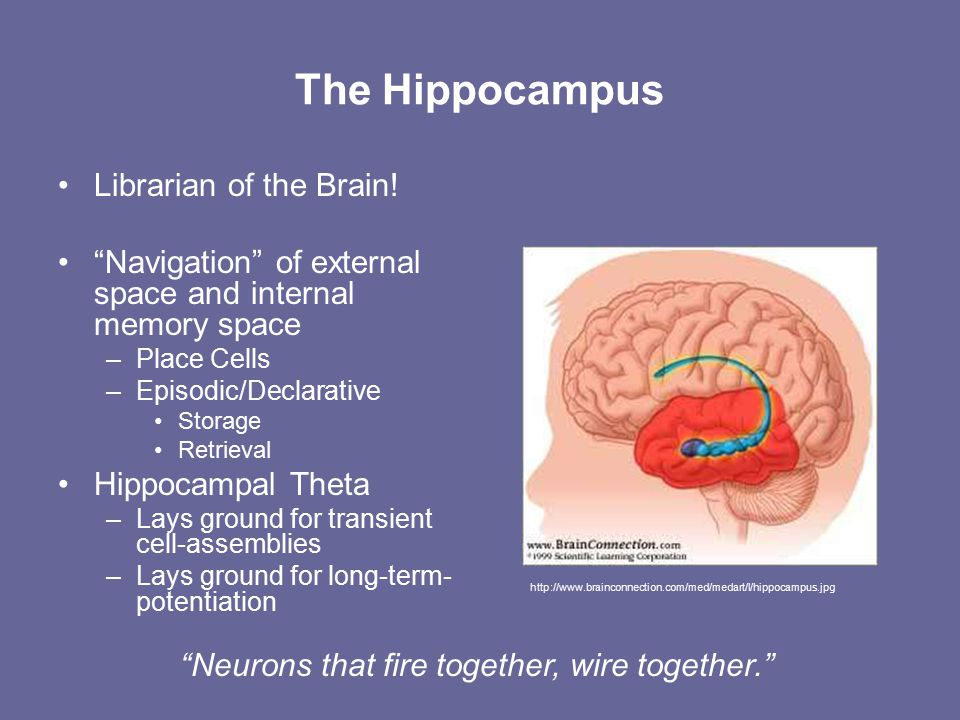 The Hippocampus Librarian of the Brain.