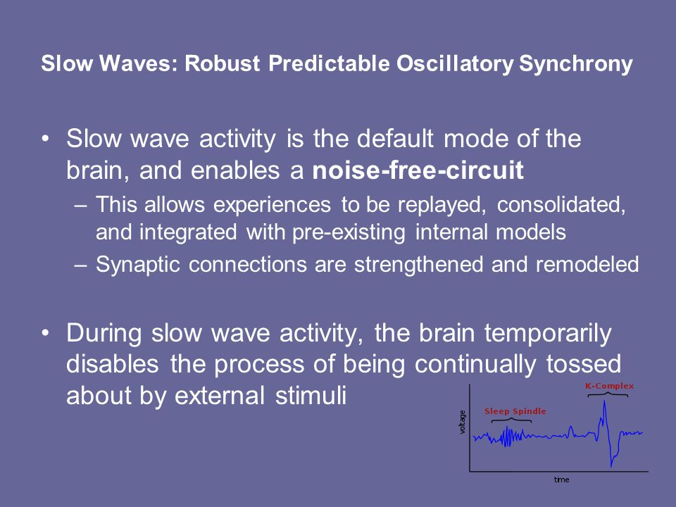 Slow Waves: Robust Predictable Oscillatory Synchrony Slow wave activity is the default mode of the brain, and enables a noise-free-circuit –This allows experiences to be replayed, consolidated, and integrated with pre-existing internal models –Synaptic connections are strengthened and remodeled During slow wave activity, the brain temporarily disables the process of being continually tossed about by external stimuli