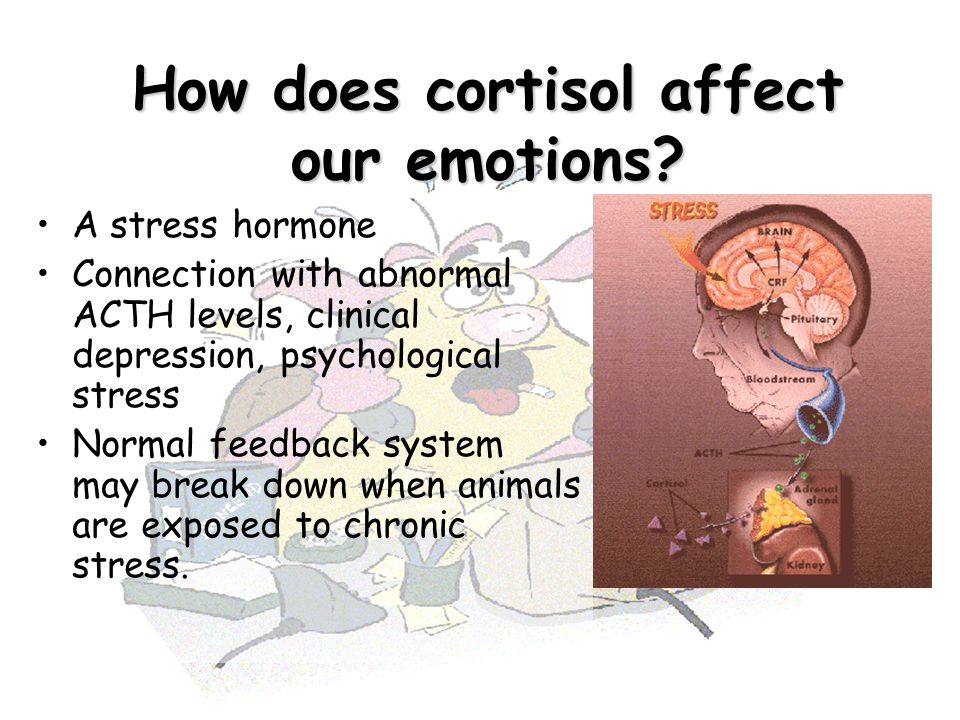 How does cortisol affect our emotions? A stress hormone Connection with abnormal ACTH levels, clinical depression, psychological stress Normal feedbac