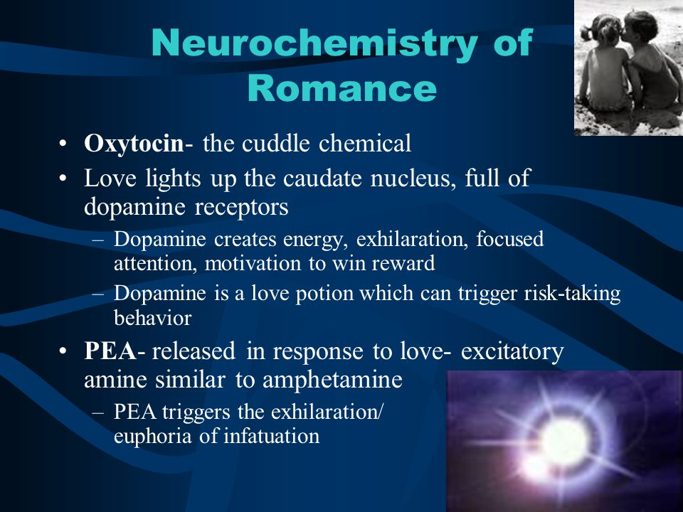 Neurochemistry of Romance Oxytocin- the cuddle chemical Love lights up the caudate nucleus, full of dopamine receptors –Dopamine creates energy, exhil
