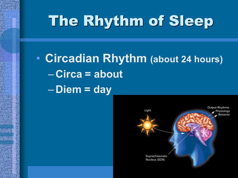 The Rhythm of Sleep Circadian Rhythm (about 24 hours) –Circa = about –Diem = day