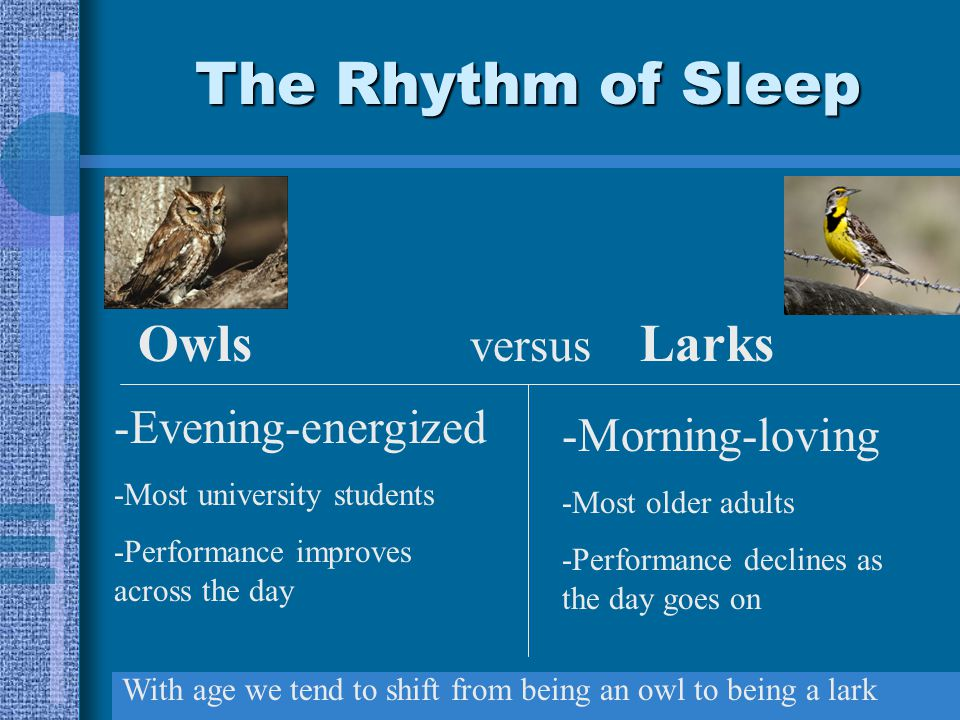 The Rhythm of Sleep Owls versus Larks -Evening-energized -Most university students -Performance improves across the day -Morning-loving -Most older adults -Performance declines as the day goes on With age we tend to shift from being an owl to being a lark