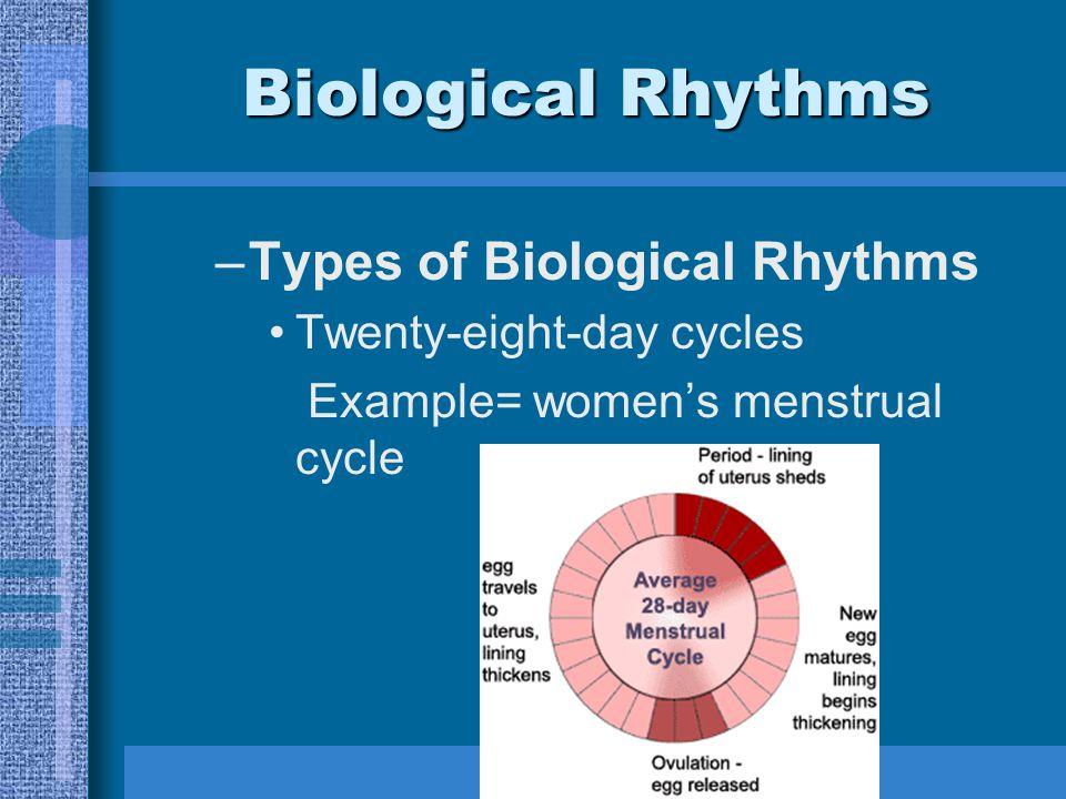 Biological Rhythms –Types of Biological Rhythms Twenty-eight-day cycles Example= women's menstrual cycle