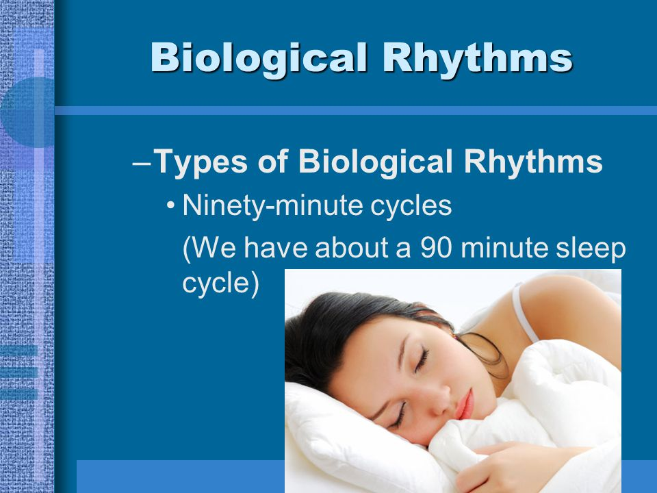 Biological Rhythms –Types of Biological Rhythms Ninety-minute cycles (We have about a 90 minute sleep cycle)
