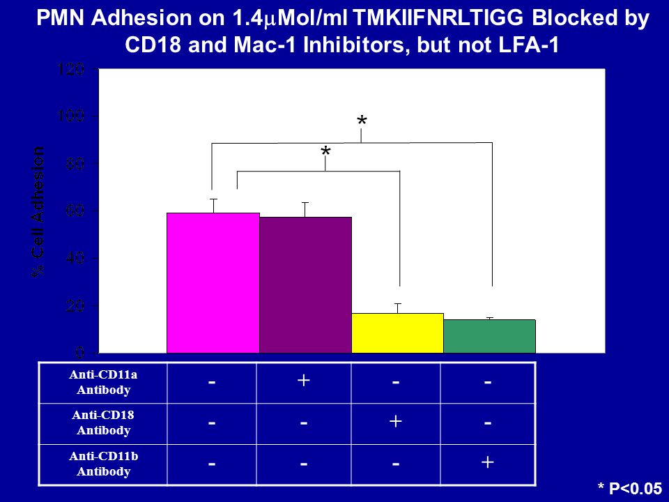 fMLF Stimulated Anti-CD11a Antibody -+-- Anti-CD18 Antibody --+- Anti-CD11b Antibody ---+ PMN Adhesion on 1.4  Mol/ml TMKIIFNRLTIGG Blocked by CD18 and Mac-1 Inhibitors, but not LFA-1 * P<0.05