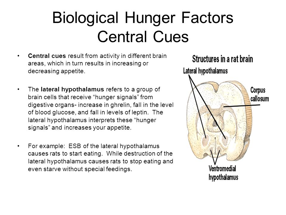Biological Hunger Factors Central Cues Central cues result from activity in different brain areas, which in turn results in increasing or decreasing a