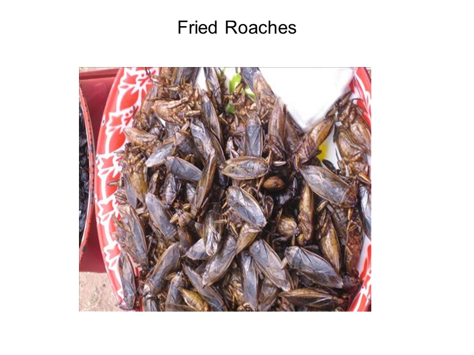 Fried Roaches