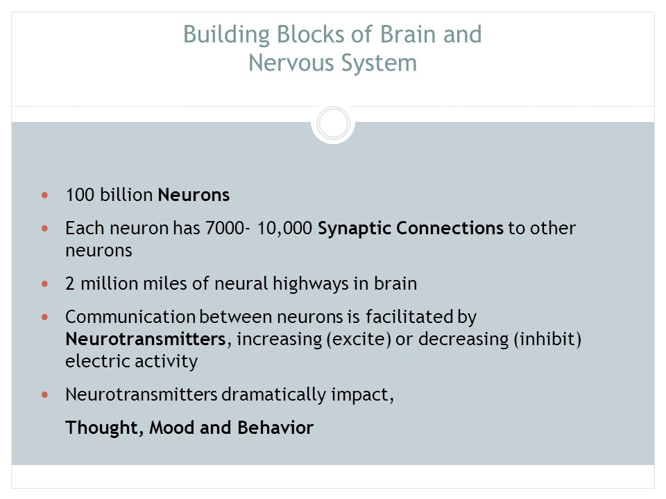 Building Blocks of Brain and Nervous System 100 billion Neurons Each neuron has 7000- 10,000 Synaptic Connections to other neurons 2 million miles of